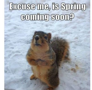 Is Spring coming soon quotes cute spring animals winter spring quotes