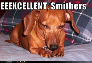 Funny-dog-pictures-mr-burns-dachshund.jpg