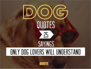 Cat and Dog Love Quotes