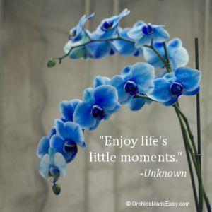 Enjoy life's little moments.