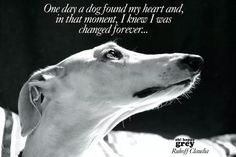 Animals are my whole world. I'm convinced that I live to help them and ...
