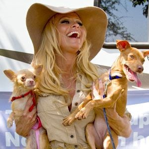 Pamela Anderson, the honorary chairman of the People for the Ethical ...