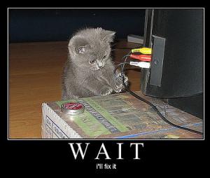 Random Funny Kitty