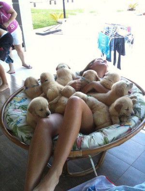funny puppies|funny puppies video|funny puppies and kittens|funny ...