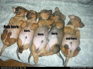 cute pictures of puppies with captions