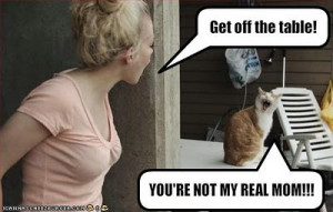 best funniest cats quotes, best funny cats quotes