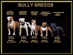 Copyright (c)2012 Show-Me American Bulldogs