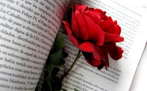 Fondos de Flores en HD: Rosa Roja en un Libro