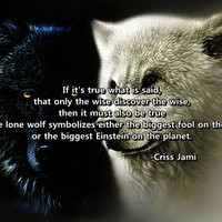 Lone Wolf Quotes Lone Wolf Quotes