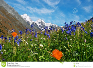 beautiful mountains and flowers. .
