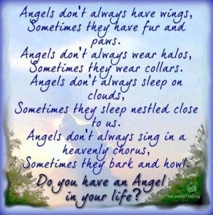... Angel in your life?Life, Dogs, Quotes, Rainbows Bridges, Pets, Doggie