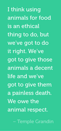 ... give them a painless death. We owe the animal respect. Temple Grandin