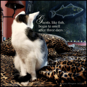 Cute Kitten Quotes Kitty wisdom quote -guests
