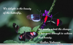 "We delight in the beauty of the butterfly…"" -Author Unknown ..."
