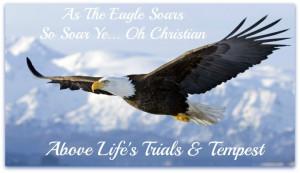 eagles-wings-88-8-flying-eagle.jpg
