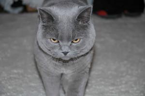 One Pissed Off Cat Luca
