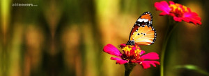 Butterfly & Flower {Flowers Facebook Timeline Cover Picture, Flowers ...