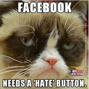 funny cat pics grumpy about facebook