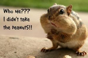 Funny Squirrel (65)
