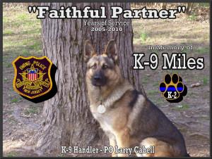 k9 police dogs german shepherds