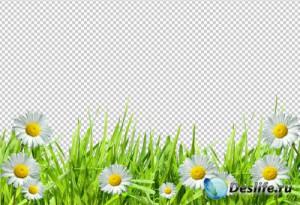 Изображения без фона 03 - Цветы