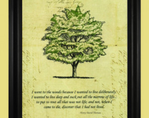 Henry David Thoreau Quote, Green Tr ee Art Drawing, Beautiful Nature ...