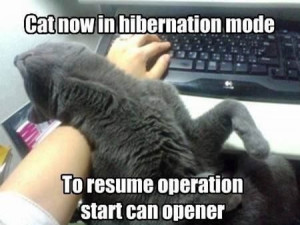 ... now in hibernation mode to resume operation start can opener cat funny