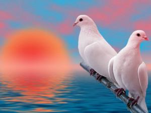 Doves Doves