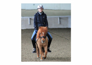 ... Horse For Sale: 2nd level Dressage Friesian Sport Horse Mare