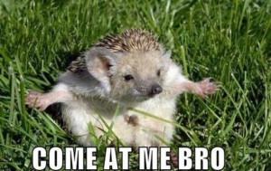 Come-At-Me-Bro.jpg#come%20at%20me%20bro%20animals