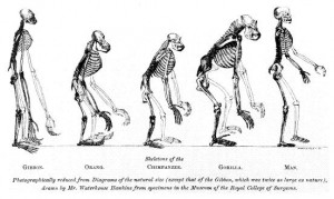 The scientific basis of Darwinism rests on five major pieces of ...