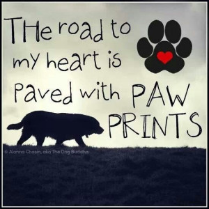 My heart is paved with paw prints
