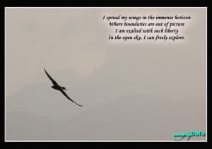 Quote 97 - Freedom