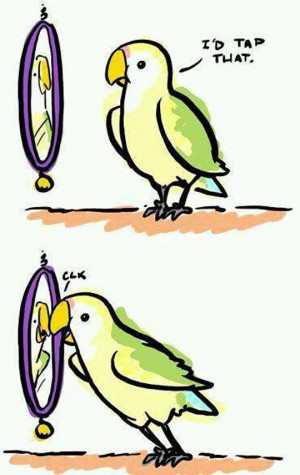 Self Love Bird // funny pictures - funny photos - funny images - funny ...