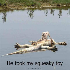 Return to Attack Of The Funny Animals – 36 Pics