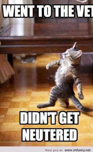 tagged funny meme vet cat funny memes vet cat funny vet cat meme vet ...