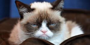 Grumpy Cat Apocalypse Facebook Still Here
