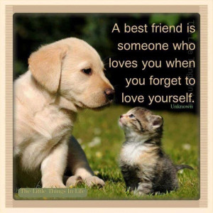 friendship quote kitten friendship quotes Best Friends Quotes, Dogs ...