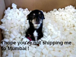 funny-hilarious-chihuahua-picture.jpg