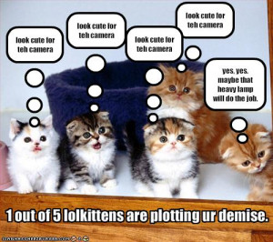 Surveys say 1 in 5 kittens is plotting are demise - Jokeroo