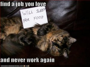 funny+cat+pictures+with+quotes+(123).jpg