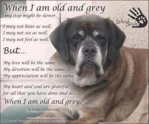 When I'm Old and Grey - A Poem by a Dog
