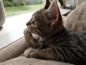 Billy The Cat Page Billythecat