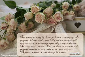 White Rose Quotes pink and white roses