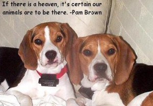 dogs in heaven tags quote quotes dog dogs dog quotes dogs quotes