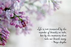 ... Photograph garden flowers #Maya Angelou quote cottage chic lavender