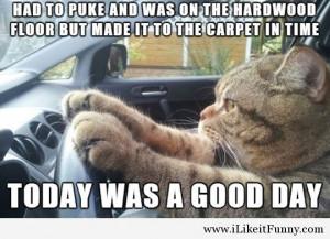 funny-cat-car-driving-carpet-floor