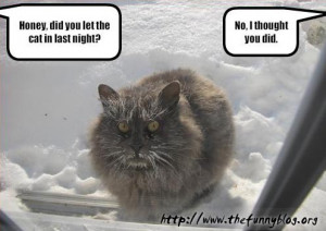 Funny cat vs Winter - Did you let in the cat?