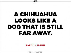 Hilarious One-Liners About Dogs to Get Through the Dog Days of ...