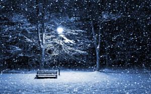 winter-snow-tree-blizzard